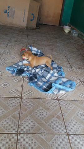 Cachorro 2 meses vacinado para doação - Foto 4