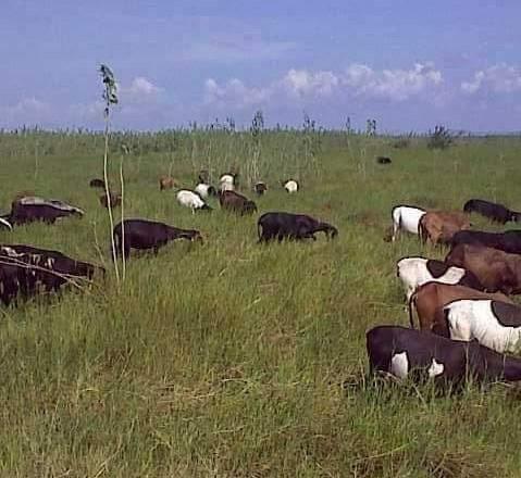 Fazenda à venda, 18400000 m² por R$ 8.000.000,00 - Zona Rural - Pilão Arcado/BA - Foto 2