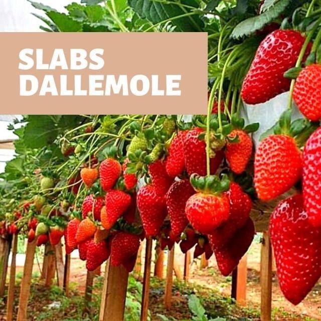 Sleb Dallemole Substratos - Foto 2