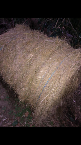 Feno de palha de arroz