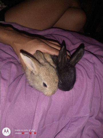 Vendo ou troco filhotes de coelhos por algo do meu interesse - Foto 5