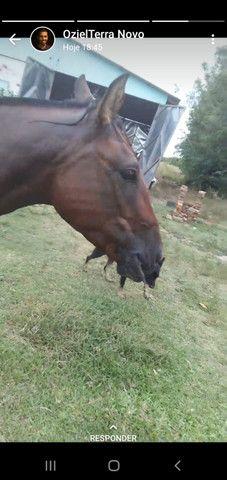 Venda permanente cavalos - Foto 4