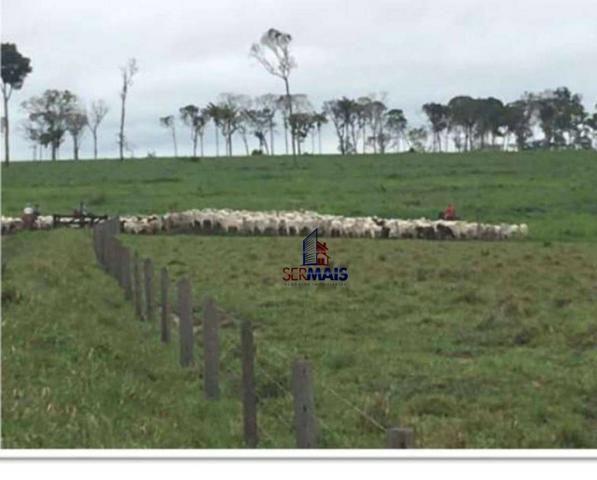 Belíssima fazenda a venda na divisa de Rondônia com o estado de mato grosso - Foto 8