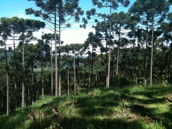 Terreno à venda, 800 m² por r$ 478.800,00 - condomínio aspen mountain - gramado/rs - Foto 6