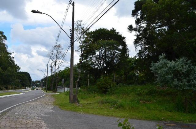 Terreno à venda, 5000 m² por r$ 3.500.000,00 - vila suica - canela/rs - Foto 18