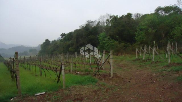 Chácara à venda em Faria lemos, Bento gonçalves cod:9908778 - Foto 2