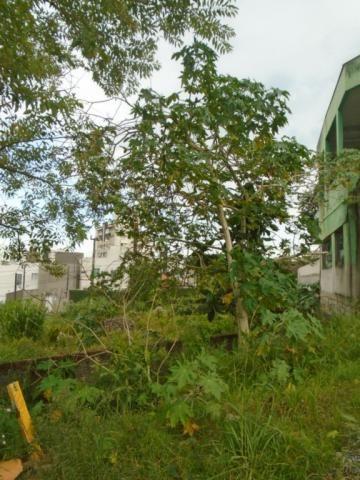 Terreno para alugar em Santo antonio, Joinville cod:07792.001 - Foto 3