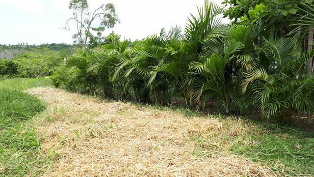 Sítio com 11.67 hectares em Igarassu/PE - Foto 8