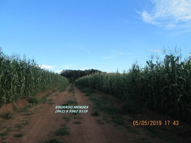 Oportunidade de adquirir sua Chácara de lazer c/ água a 1 km de Gameleira de GO - Foto 15