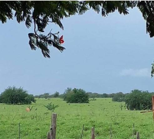 Fazenda à venda, 18400000 m² por R$ 8.000.000,00 - Zona Rural - Pilão Arcado/BA - Foto 10