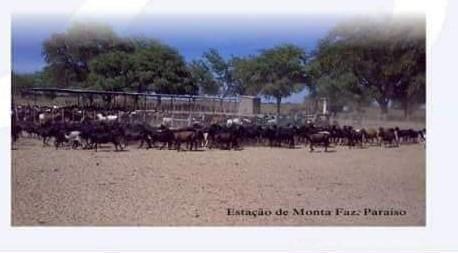 Fazenda à venda, 18400000 m² por R$ 8.000.000,00 - Zona Rural - Pilão Arcado/BA - Foto 12