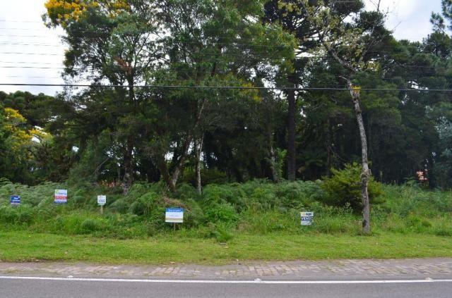 Terreno à venda, 5000 m² por r$ 3.500.000,00 - vila suica - canela/rs - Foto 14