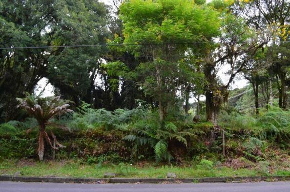 Terreno à venda, 5000 m² por r$ 3.500.000,00 - vila suica - canela/rs - Foto 8