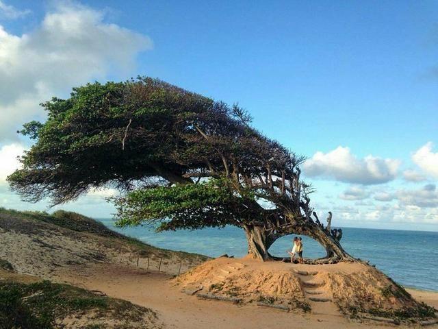 Vendo Terreno na Praia Barra de Maxaranguape