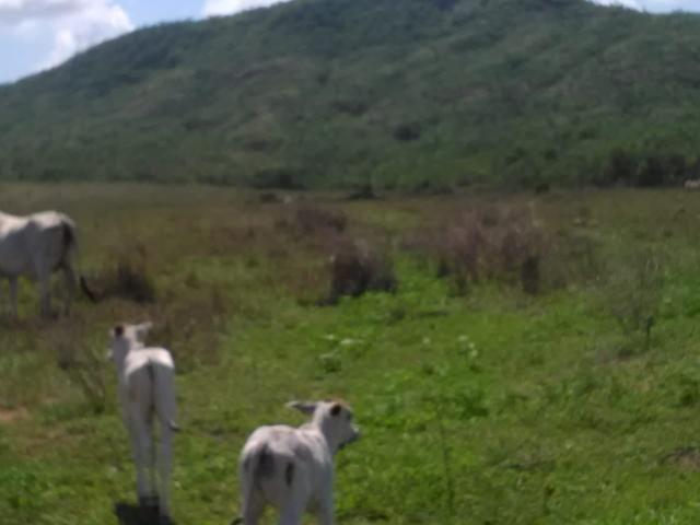 Fazenda em paranatinga - Foto 14