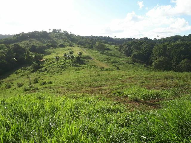 Sítio com 11.67 hectares em Igarassu/PE - Foto 3