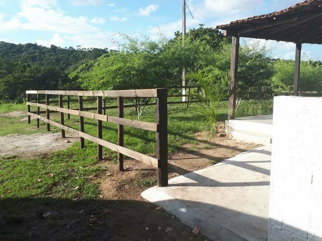 Sítio com 11.67 hectares em Igarassu/PE - Foto 10