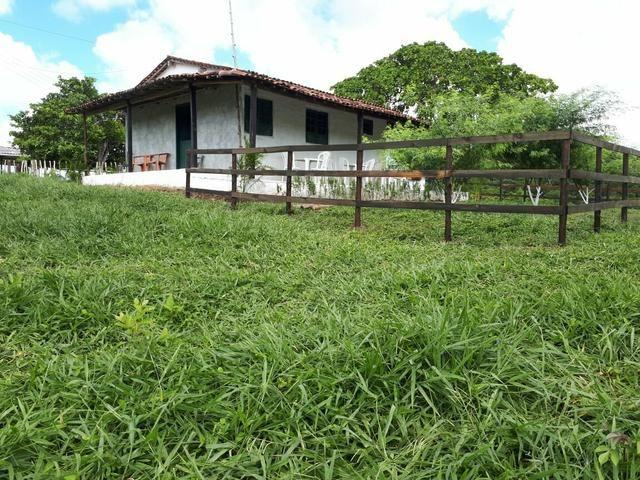 Sítio com 11.67 hectares em Igarassu/PE - Foto 4