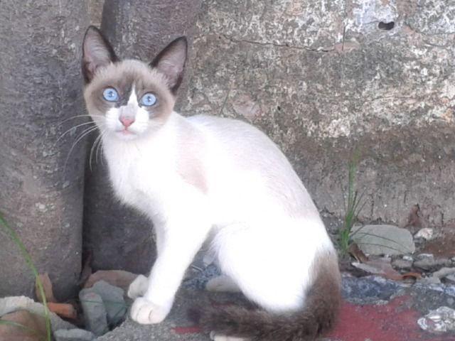 Doação gatinha - Foto 4