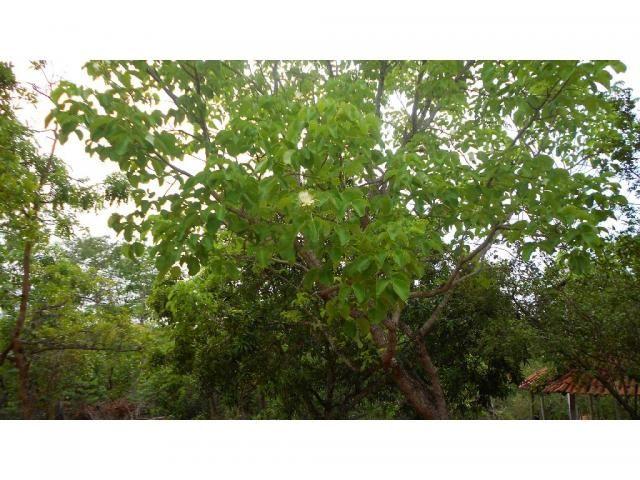 Chácara à venda em Zona rural, Chapada dos guimaraes cod:20937 - Foto 9