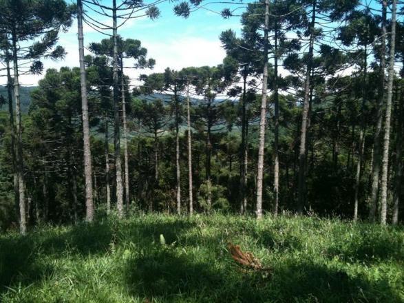 Terreno à venda, 800 m² por r$ 478.800,00 - condomínio aspen mountain - gramado/rs - Foto 3