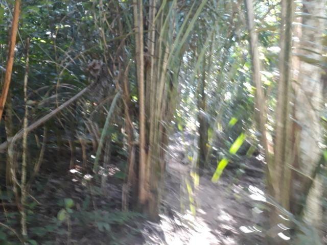 Fazenda de 785 hectares em Rosário Oeste MT - Foto 10