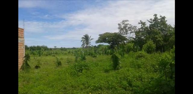 Vendo ou Troco Terreno na zona rural de Santa Inês - MA / Área 10.000m² - Foto 4