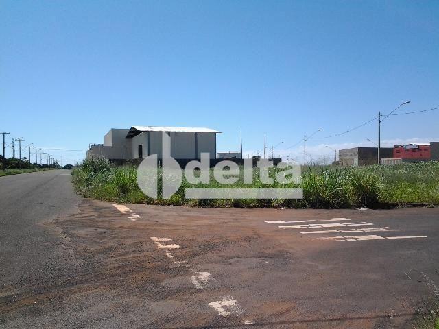 Terreno para alugar em Novo mundo, Uberlândia cod:521607 - Foto 2