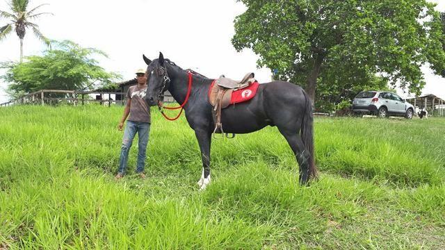 Sítio com 11.67 hectares em Igarassu/PE - Foto 12