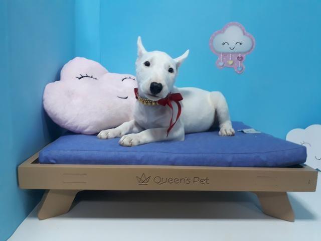Bull terrier fêmea branca em 10x já vacinada com garantia!!! - Foto 3