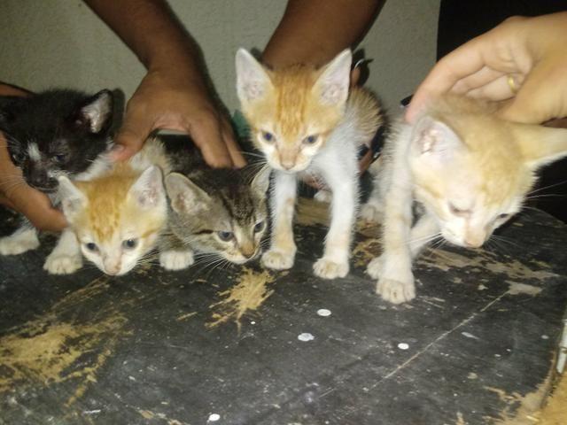 Doace 5 gatos