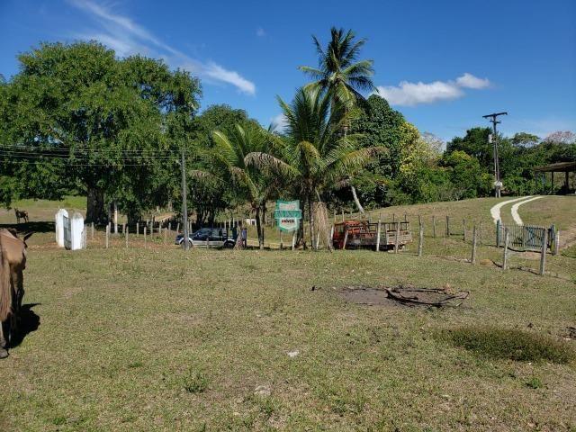 Ilhéus. Fazenda com 368 Hectares cultivo de cacau e gado - Foto 16