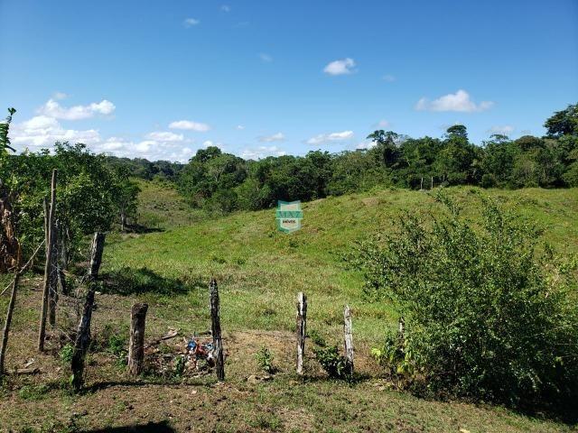 Ilhéus. Fazenda com 368 Hectares cultivo de cacau e gado - Foto 15