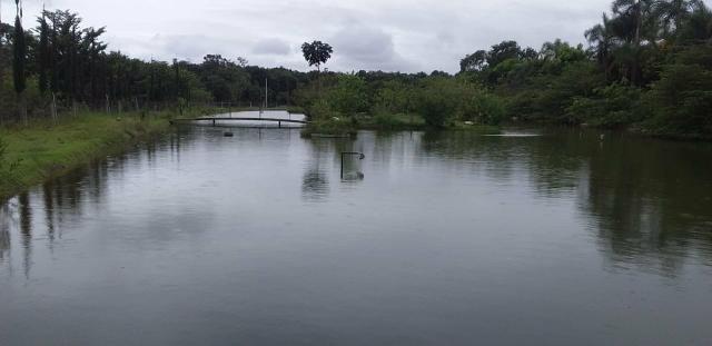Chácara com lagos e pomar - Foto 2