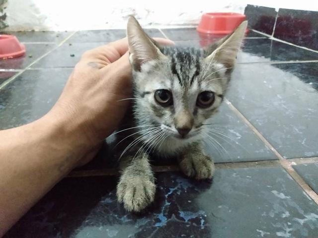 Doa-se gatos - Foto 2