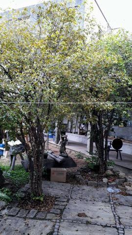 Árvore frutífera - Foto 2