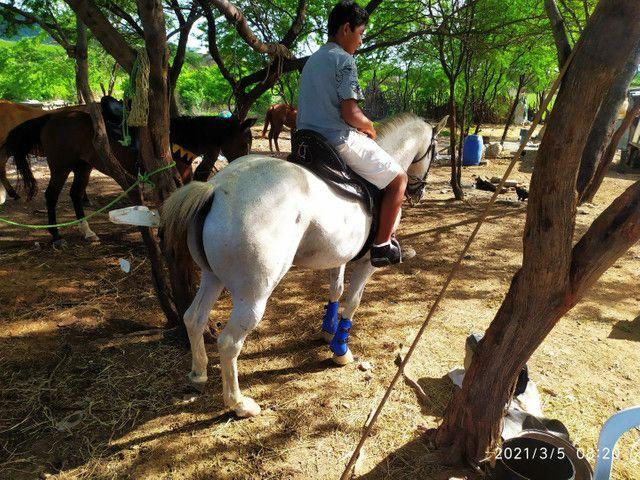 Cavalo de Vaquejada de direita  - Foto 4