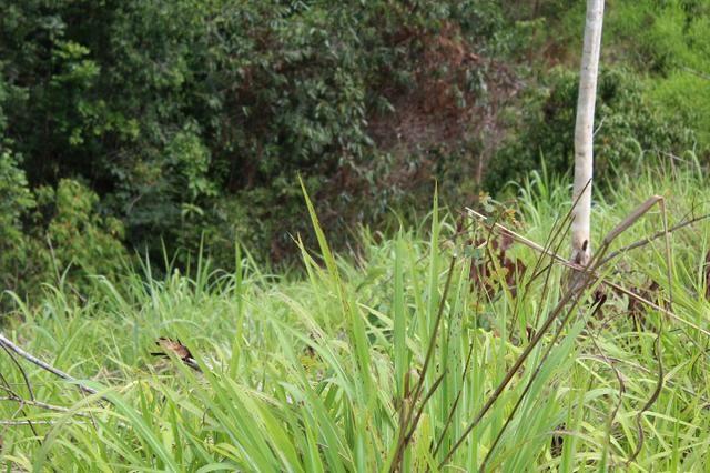 Fazenda 5 Alqueire Municipio cocalzinho 04km estrada chão e 19 asfalto