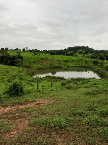 Fazenda 70 Alqueires 70 km de Goiania professor Jamil