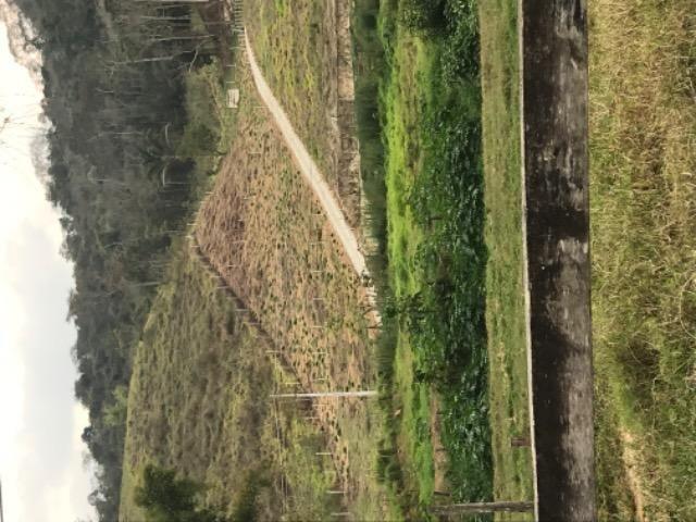 Chácara sítio terreno em São José do Ribeirão ( bom jardim) - Foto 11