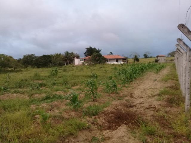 Excelente sítio, com casa sede e casa de caseiro na região de Santo Estevão Bahia - Foto 13