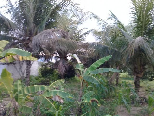Excelente sítio, com casa sede e casa de caseiro na região de Santo Estevão Bahia - Foto 16