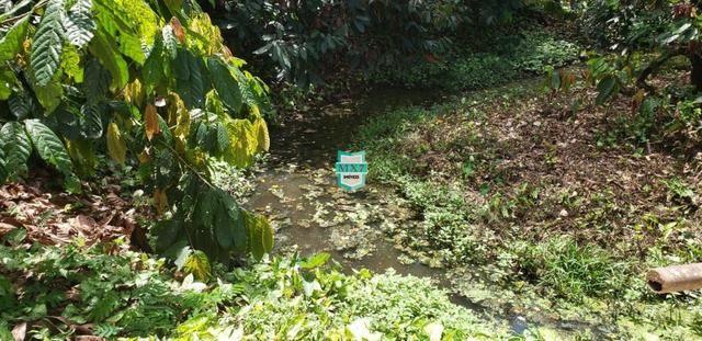 Camacan. Fazenda de Cacau com 430 Hectares. Rica em água - Foto 6