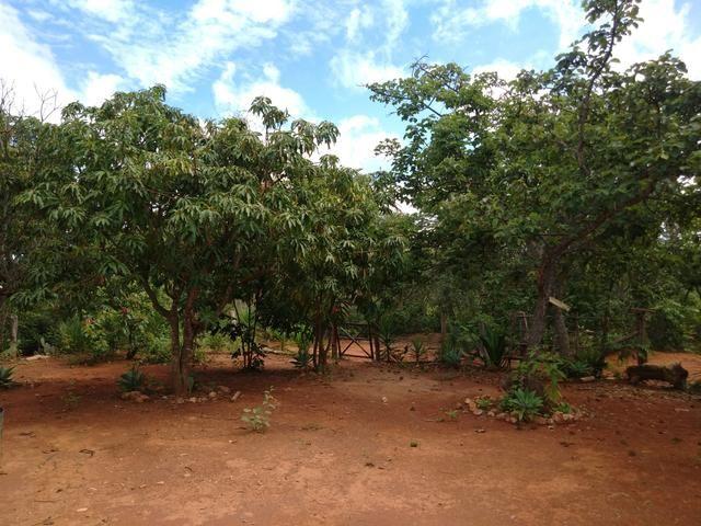 Vendo Chácara na Comunidade Rural de Extrema em Bocaiuva-Mg - Foto 5