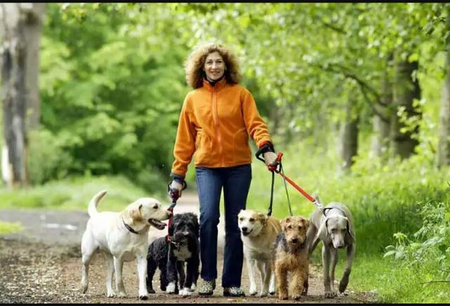 Dog Walker/ Passeador de Cães