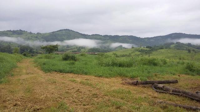 Fazenda 236 alqueires - Foto 9