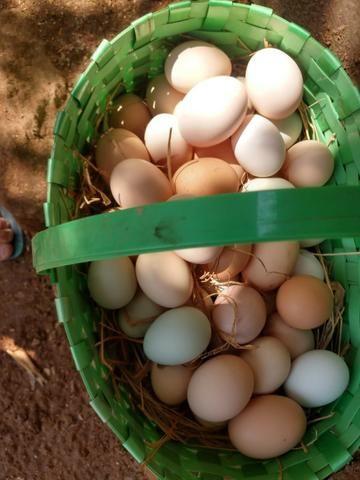 Ovos caipira da gema amarelinha apenas R$6,50/ dúzia