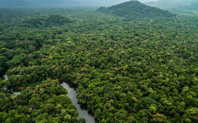 Vendo 107 mil hectares de floresta bioma Amazônico - 200 por hectares