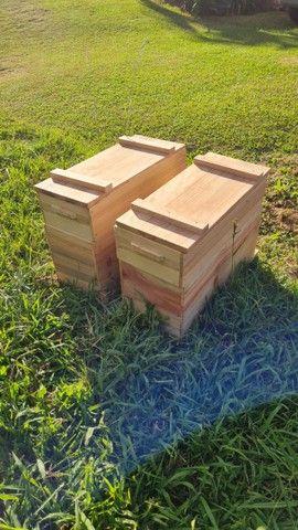 Caixa de criação de abelha. Apicultura.