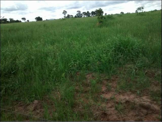 Fazenda em Rosário Oeste 1.500 hectares - Foto 3